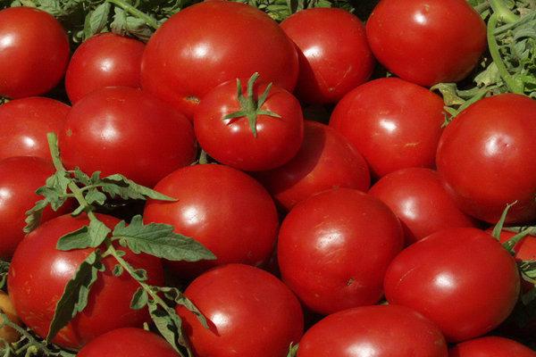 ۴۴تن گوجه فرنگی قاچاق کشف شد/توزیع محصولات بین زلزله زدگان