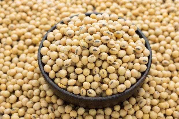 چین ۲ میلیون تن دانه سویا از آمریکا خرید