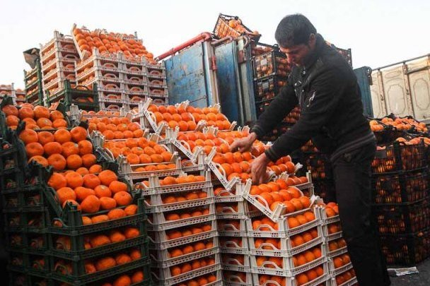 گران شدن پرتقال در پی ذخیره سازی میوه