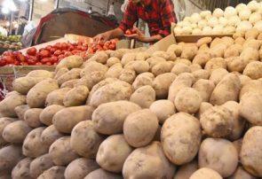 قیمت سیبزمینی ۴۰ درصد کاهش خواهد یافت