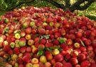 ۱۰۰ تن سیب خراب شد نه هزاران تن!