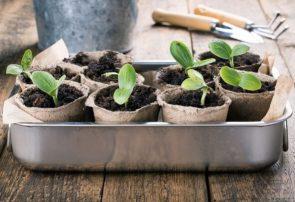 تولید گلدان های زیست تخریب پذیر/ تغذیه بذرها از گلدان