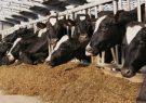 واردات مکمل خوراک دام همچنان با ارز نیمایی