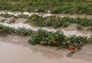 تشریح آخرین وضعیت پرداخت خسارت به سیلزدگان بخش کشاورزی