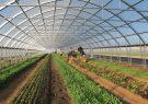 انتقال کشت ۵ هزار هکتار سبزی و صیفی از فضای باز به گلخانه تا ۱۴۰۰