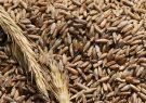 ماجرای گندمهای آلودهای که به دولت فروخته شد