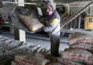 افزایش صادرات سیمان به چین و بنگلادش/مشکلی برای بازگرداندن ارز نداریم