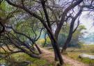 واگذاری پارک جنگلی حاشیه تهران