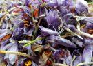 پایان خرید زعفران از کشاورزان