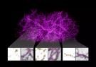 نقشه برداری از ماده تاریک