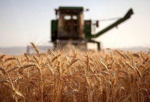 قیمت نهایی خرید تضمین گندم در انتظار تشکیل شورای قیمتگذاری