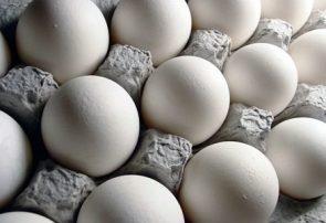 قیمت تخم مرغ در روزهای آینده کاهش مییابد