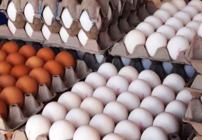 هرشانه تخم مرغ ۴۵ تا ۴۷هزار تومان!