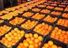 پرتقال جنوب کیلویی ۳۵ هزار تومان!
