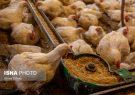 هشدار کمبود مرغ در ماههای آینده