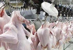 ضعف برنامهریزی و نظارت عامل صفهای مرغ و کوچک شدن سفره مردم شد