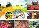 رشد منفی صادرات محصولات کشاورزی / هند مشتری اول پسته ایران شد