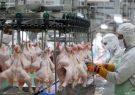 قیمت هر کیلوگرم گوشت مرغ ۳۷ تا ۴۰ هزار تومان