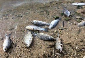 آسیبهای واردشده به آبزیپروری خوزستان در پی تنش آبی