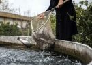 راهکاری برای پالایش پساب پرورش ماهی