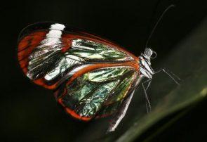 زیستشناسان در پی کشف اسرار حیوانات نامرئی!